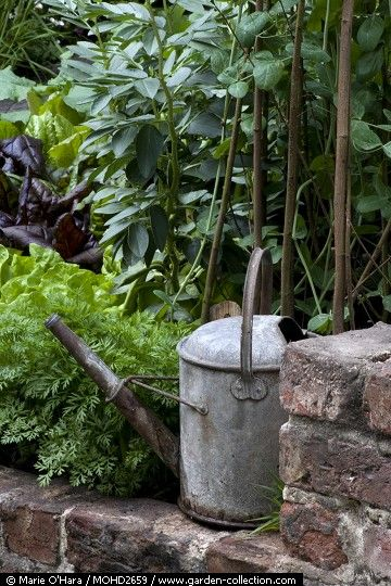 . galvanized watering can (found one!)