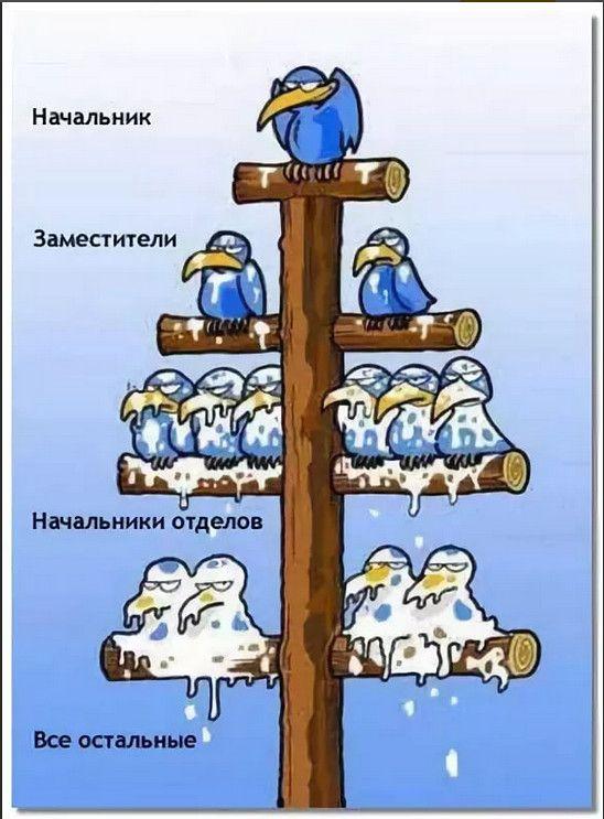 Картинка про ворон и начальство