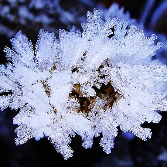 Cool white frost  #frost #white #winter #photography #macro #fotosbykarin #redbubble #KarinRavasio #greetingcards #prints #framedprints