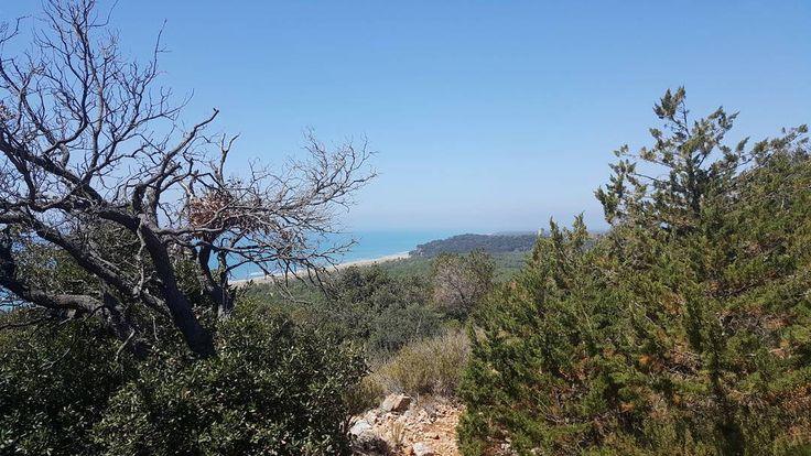 La spiaggia di Collelungo vista dal sentiero per Cala di Forno. #parcodellamaremma #hiking #hikevibes #hikingadventures
