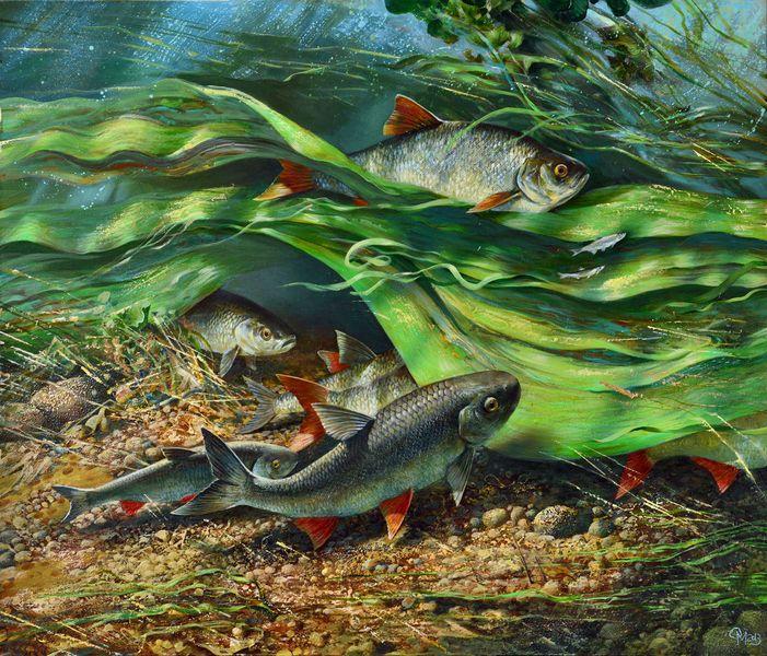 Картинки рыбы для календаря