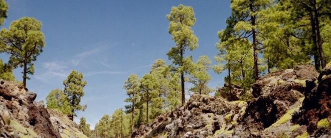 Nationalpark Teneriffa mit Abflug Memmingen