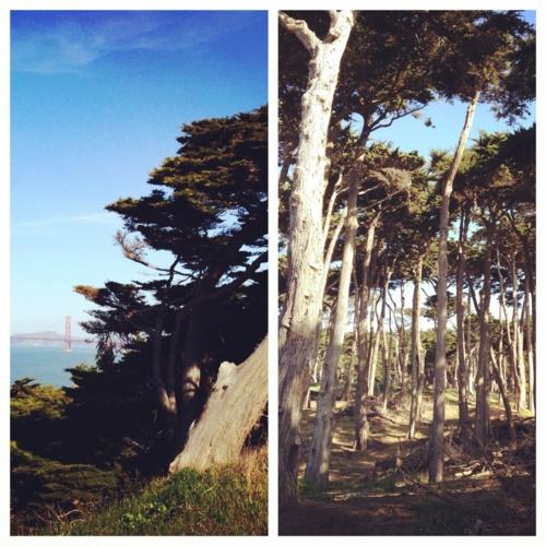 Golden Gate / Lands End //  San Francisco ///    photos: delegate j