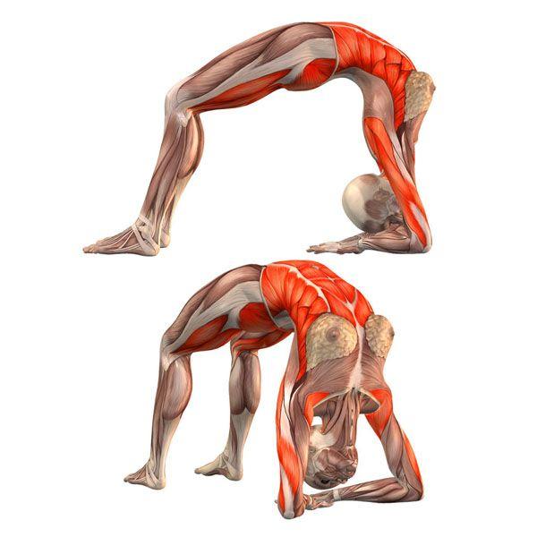 Bridge pose on elbows, head hanging - Urdhva Dhanurasana on elbows - Yoga Poses | YOGA.com
