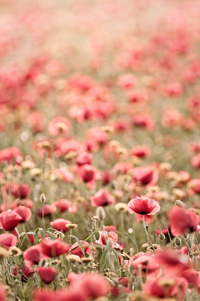 Via Tumblr Image 949799 By Mollyroop On Favim Com: Flowers Of The Meadow