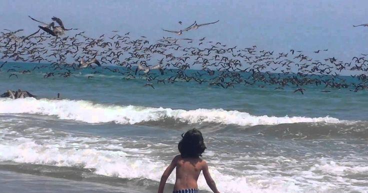 Fenómenos como estos no se ven a diario, y estas personas pudieron ser testigos de uno muy especial. Cientos y cientos de pelícanos, ajaron a buscar comida en una playa mientras había gente cerca. Una imagen realmente sombrosa que impresiona pero que es prte de la naturaleza. En el video se muestra a un niño disfrutando del momento, de la belleza y de lo padre que debió haber sido estar tan cerca. Aproximadamente a 50 cm sobre el mar, estos pájaros revoloteaban y permanecieron por unos…