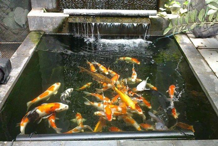 Cara Membuat Filter Kolam Ikan Sederhana dan Minimalis