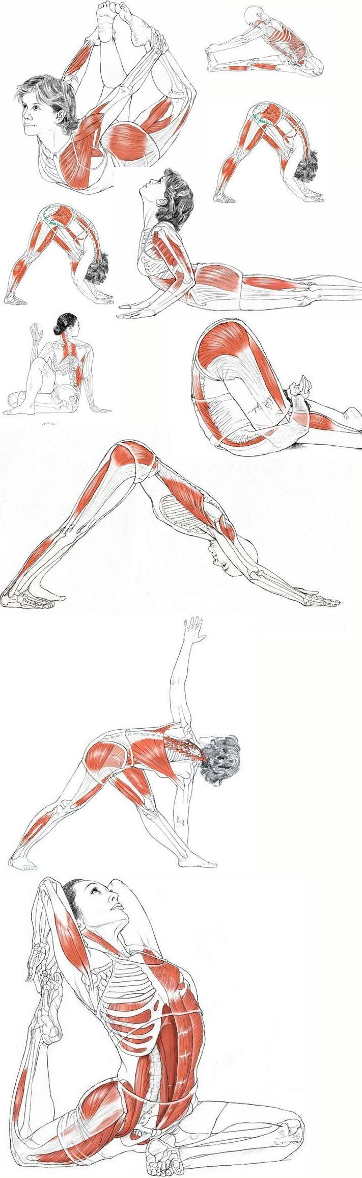 растяжкa Muscle Stretch while doing Yoga Poses.