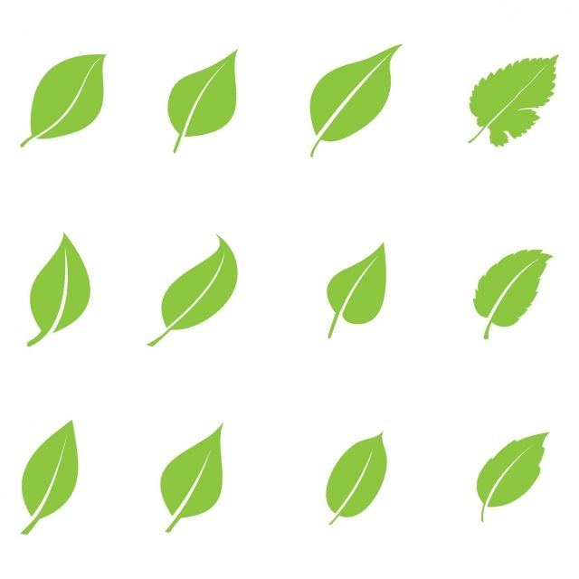 Green Leaf Ecology Nature Element Vector Set Leaf Icons Nature Icons Green Icons Png And Vector With Transparent Background For Free Download Green Leaves Green Nature Ecology