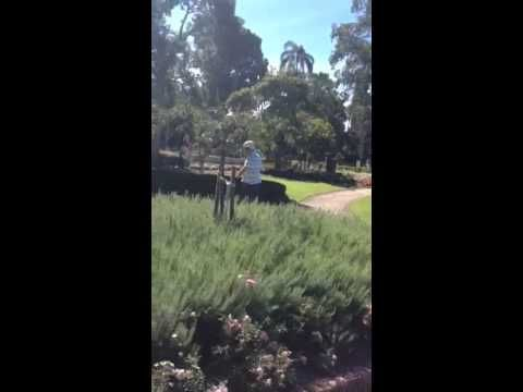 Kangaroo Segway Tours Emily at Brisbane City Botanical Gardens