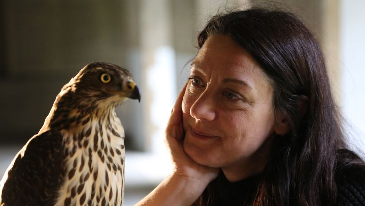 PBS NATURE H is for Hawk: A New Chapter : Helen Macdonald's best-selling book H Is for Hawk told the saga of a grieving daughter who found healing in training a goshawk. Now she digs deeper into the world of these raptors by following a family in the wild and raising a goshawk of her own.