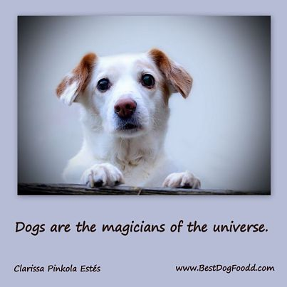 """Love this cute dog quote: """"Dogs are the magicians of the universe."""" - discover more ..."""