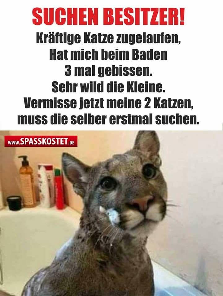 ~ Kräftige Katze zugelaufen... ~