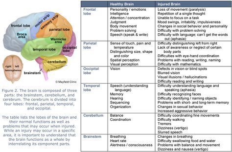 Brain Lobes And Function Chart | figure 2 the brain is composed of three parts the brainstem cerebellum ...