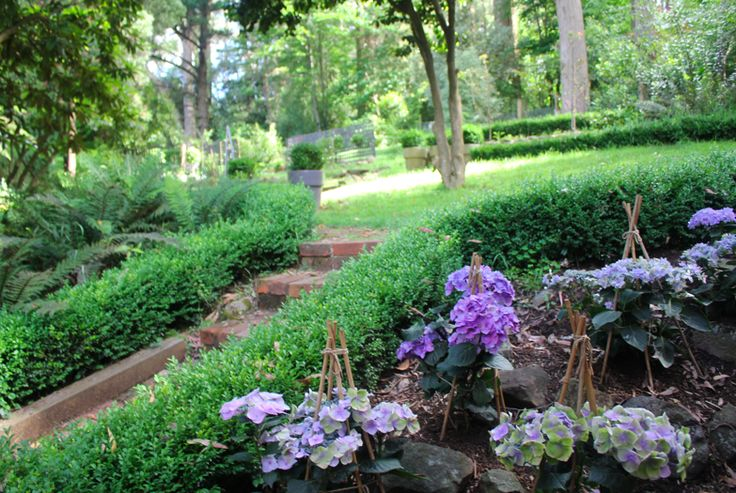 There is something magical about a blue garden, especially at dusk. It is then, during the fading light, when the elegant blue flowers and...