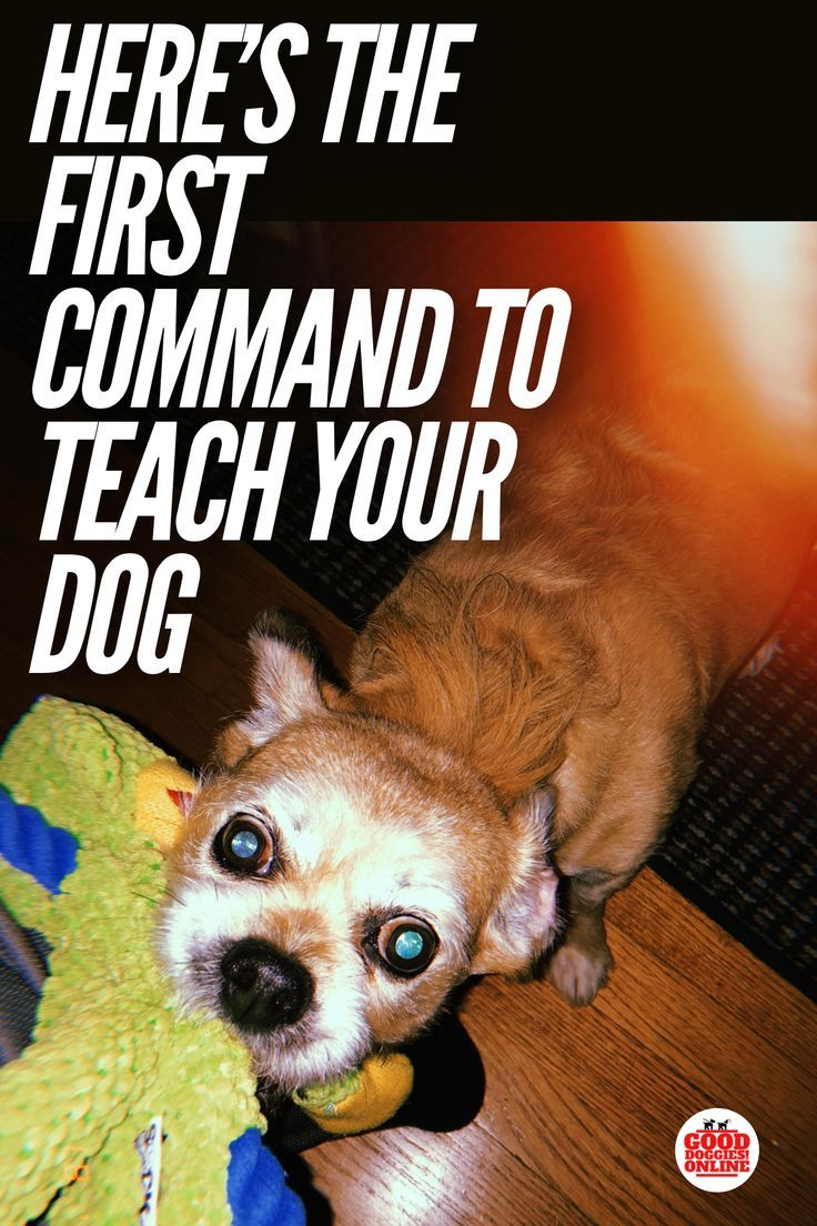 How To Train Your Dog To Sit Training Your Puppy Training Your
