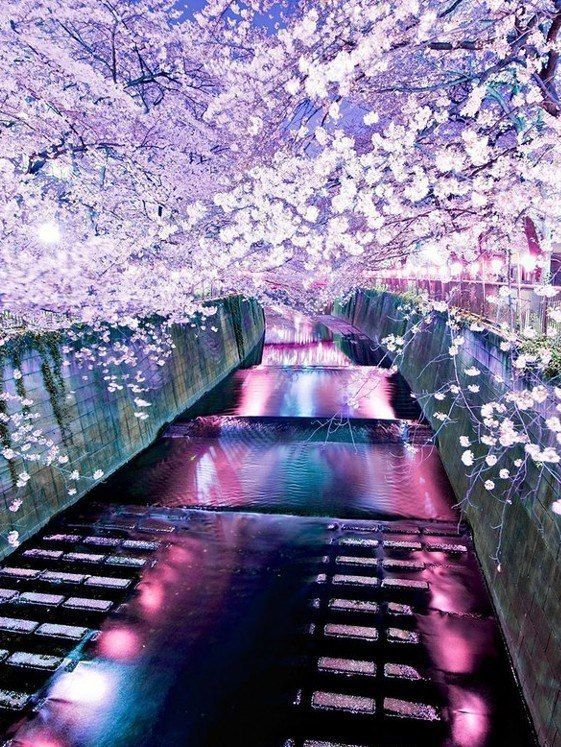 Incredible Journey • citieslight: Japan