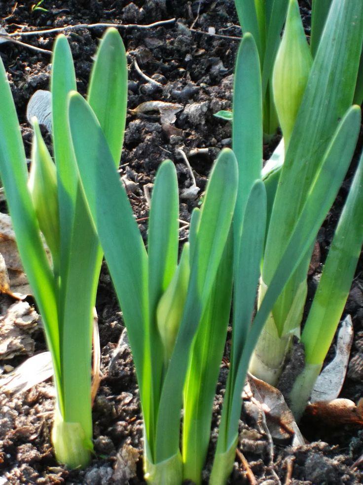 Kinga about moments in life: Pierwsze oznaki wiosny