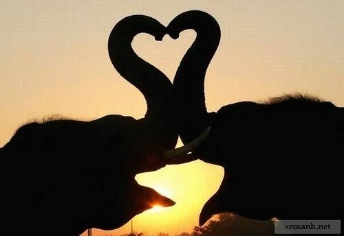 40 photos of animals in love!