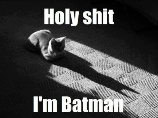 Batman Or Catwoman