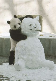 Snow Panda im sure hes not building itbut hes.....