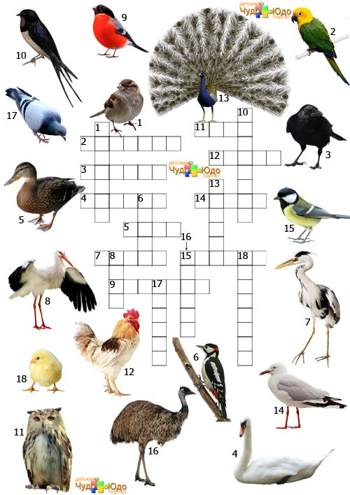 "Детский кроссворд ""Названия птиц"""