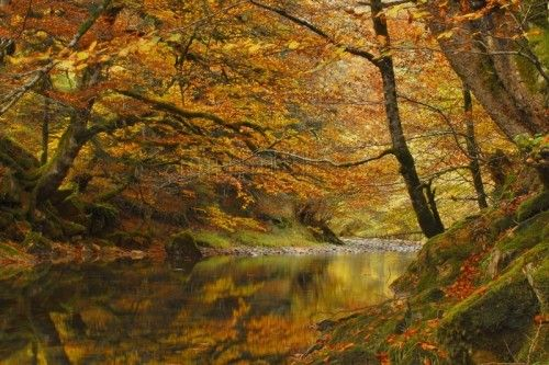 Irati beech grove.   Navarra, Spain    Selva de Irati, Navarra, España