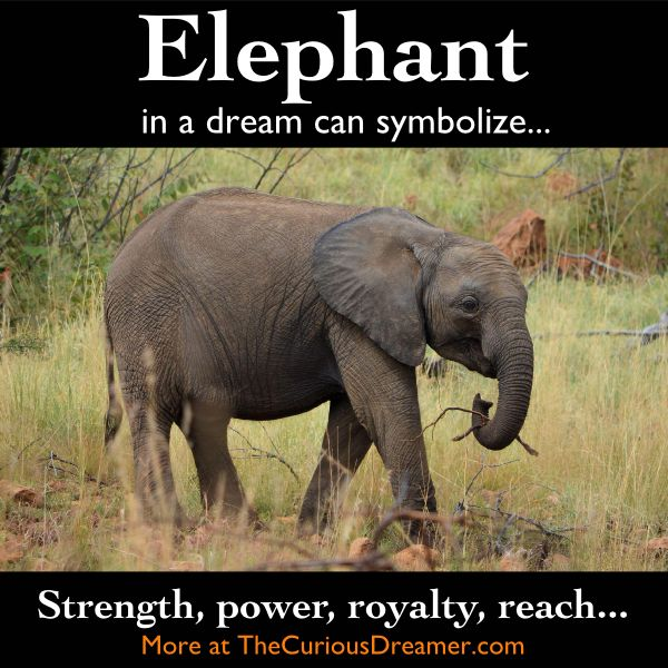 An elephant as a dream symbol can mean...        More at TheCuriousDreamer.    #dreammeaning #dreamsymbol