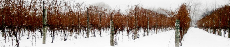 Pillitteri Estates Winery: World's largest estate producer of Icewine