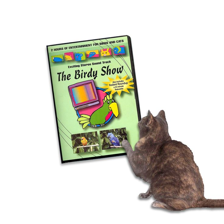 The Birdie Show & Rodent Roundup! Cat Video for Cats