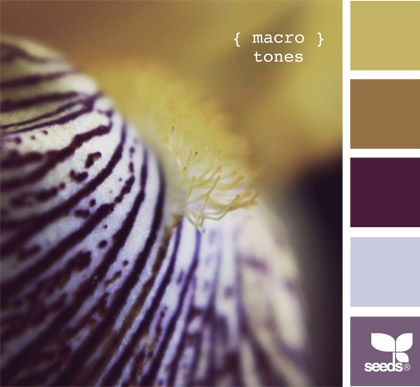 macro tones - pale on the walls, browns for chairs, dark purple for a throw. love this!
