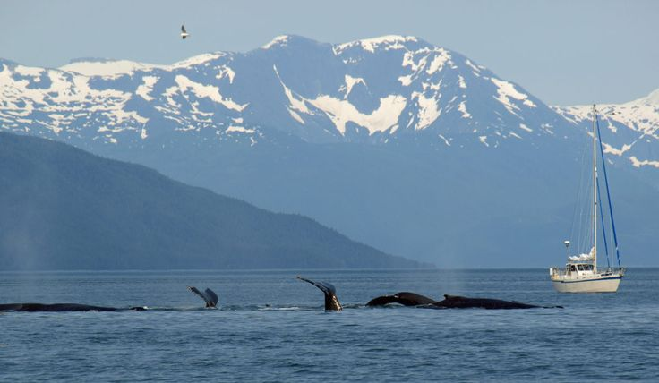 Whale Watching in Stephens Passage near Juneau.  A perfect day.