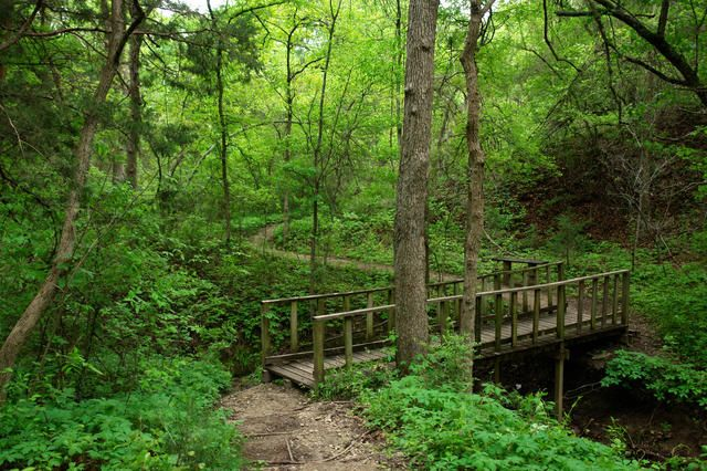 Talk a walk through the Cedar Ridge Preserve, just 20 minutes from downtown Dallas