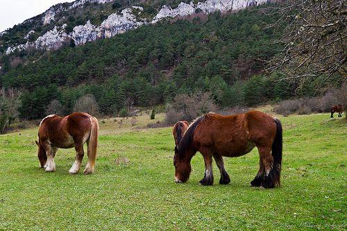Caballos en el prado - Horses on the meadow