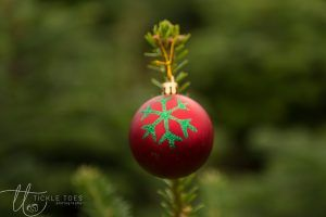 glencullen-christmas-tree-farm-dublin-1