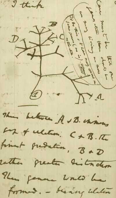 the reception of charles darwin's on V 1 darwin's philosophical revolution : evolutionary naturalism and first reactions to his theory correspondence as a medium of reception and appreciation.