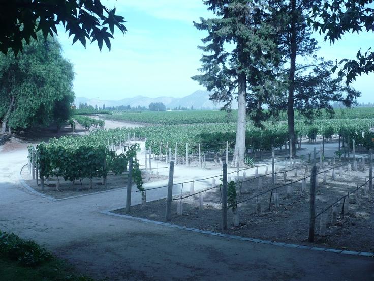 Los viñedos con las distintas cepas del vino chileno
