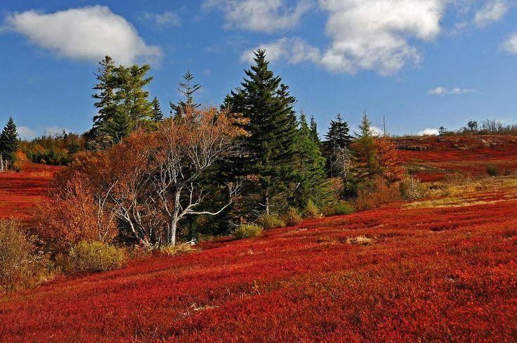 「ブルーベリーの紅葉」きれいですね! カナダ ノバスコシア州 パーズボロのワイルドブルーベリーの紅葉だそうです。 by Dennis Jarvis CC BY-SA2.0 https://commons.wikimedia.org/wiki/File:Wild_blueberry_fields_in_the_fall_near_Parrsboro.jpg …
