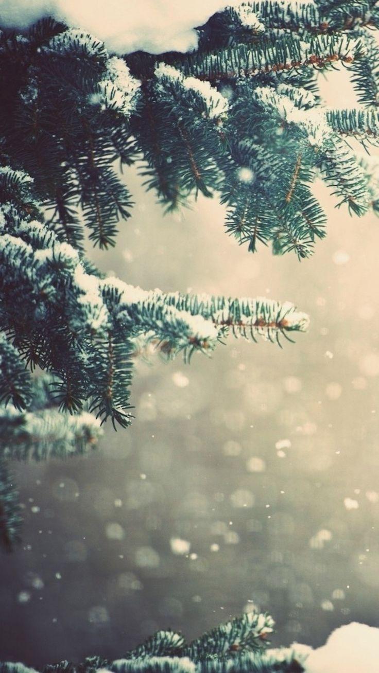 1080x1920 Wallpaper winter, spruce, branches, snow, glare