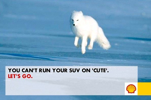 SEE SHELL'S (NOT REALLY) CROWD-SOURCED ARCTIC DRILLING CAMPAIGN: Shells Oil, Arctic Campaigns, Social Media, Arctic Drill, Red Foxes, Arctic Foxes, Lets Go, Medium, Animal