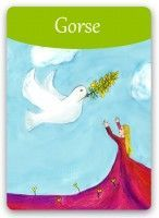 Bach Flower: Gorse - For people who have given up all hope. Brings new hope and a  joyful outlook. Find more Bach Flower cards: www.bach-flowers-online.org