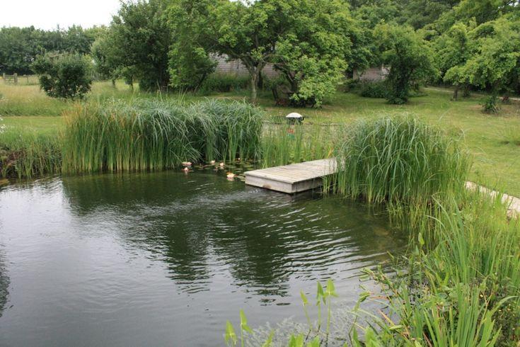 Natural swimming pool/pond.