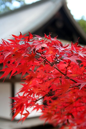 Japan autumn is realy besutiful and a little bit romantic