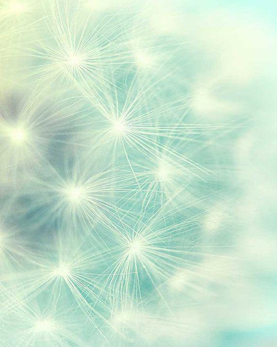 Nature photography dandelion