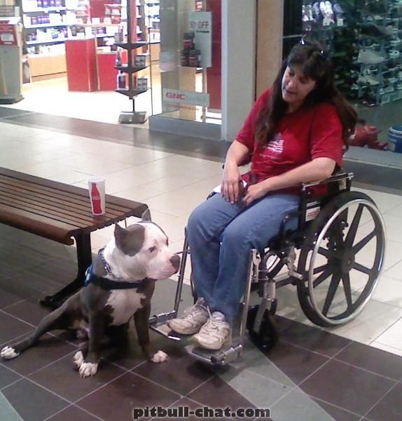 Therapy Dog Training Bc