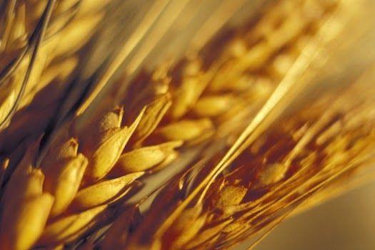 LA NUOVA POLITICA AGRICOLA COMUNITARIA 2014-2020: AGEA, UE RISCONTRA ANOMALIE PER 69 MLN DI EURO SU ...