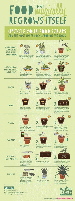 In deze infographic zie je 16 groente- en fruitsoorten die je thuis nieuw leven in kunt blazen. http://www.culy.nl/inspiratie/16-x-groente-en-fruitsoorten-die-je-thuis-nieuw-leven-kunt-blazen/