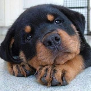 That feeling when you realise it is only Wednesday. #humpday #cutie #puppy #alphah http://alpha-h.com/