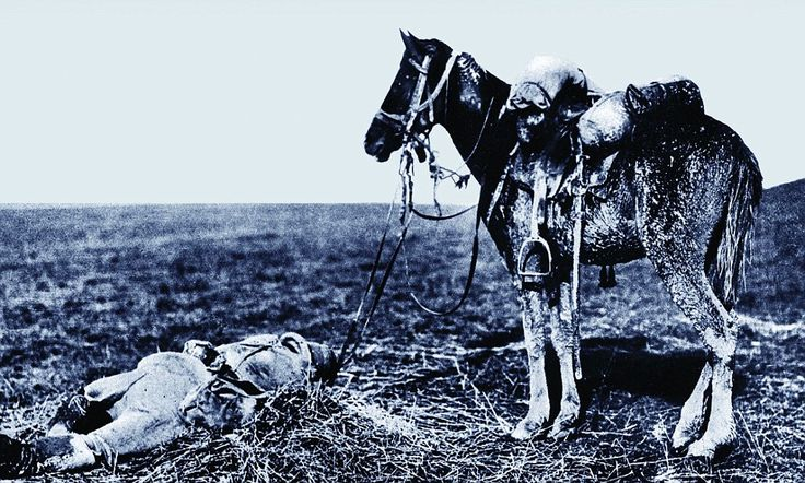 Unshakeable courage of the real War Horses: The eight million forgotten animals who were killed on the frontline