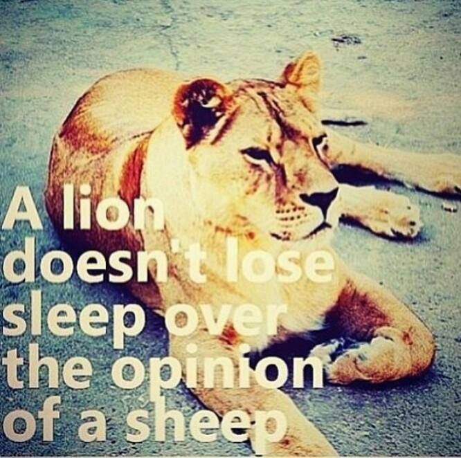 Lion Sheep Quote: A Lion Doesn't Lose Sleep Over The Opinion Of Sheep